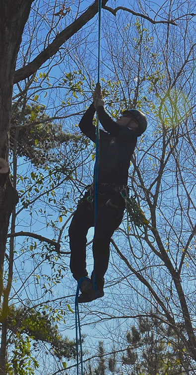 Tree Tech owner, Stephen Perkins, climbing a tree without using tree spikes